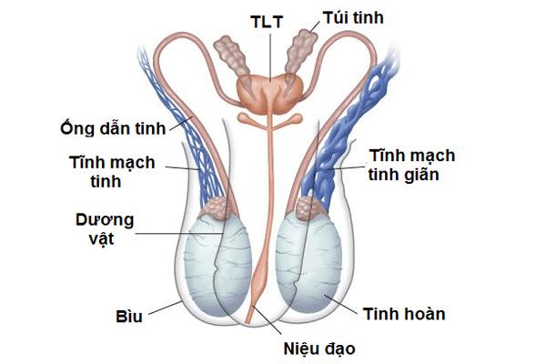 Dấu hiệu nhận biết bệnhgiãn tĩnh mạch thừng tinh
